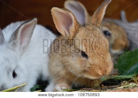 Group of small young rabbits in shed. Easter symbol, Slovak tradition