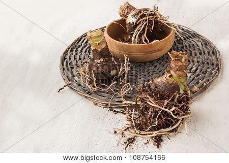 Bulbous Tubers Hippeastrum (amaryllis)