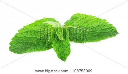 Aromatic mint leaves isolated on white, close up