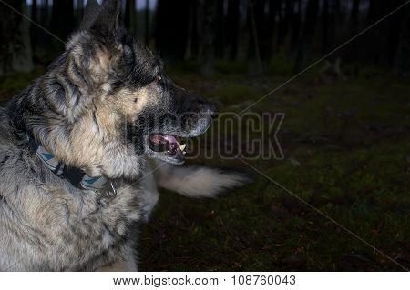 Dog In The Night