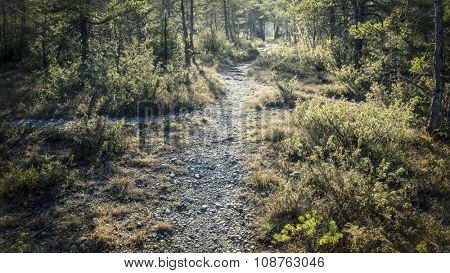 An image of a forest path near Wolfratshausen Pupplinger Au