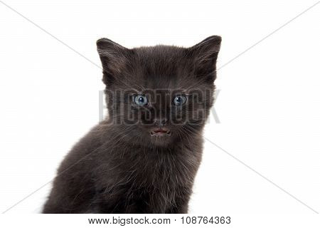 Black Kitten With Its Mouth Open