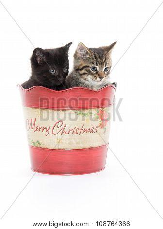 Two Cute Kittens In Bucket