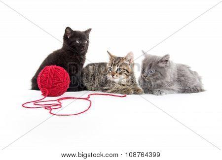 Three Kittens And Yarn