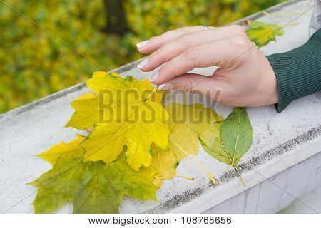 Fallen Autumn Leaves In A Female Hand
