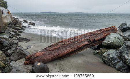 Alki Shoreline - Logs 2