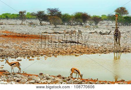 A vibrant waterhole in Etosha