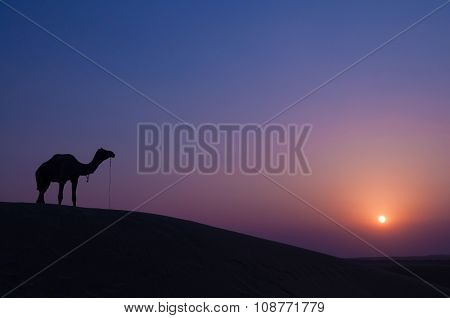 Desert landscape with camel at sunset in India desert.
