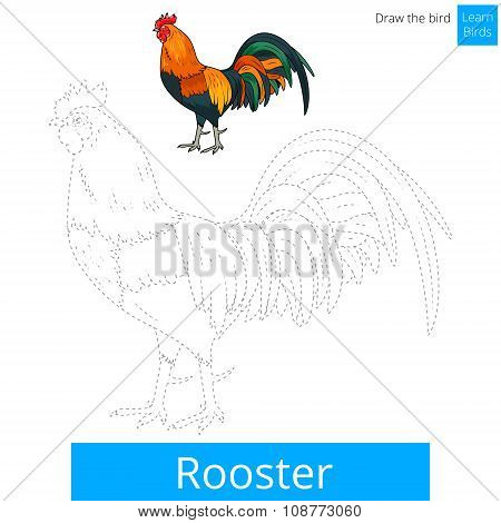 Rooster bird learn to draw vector
