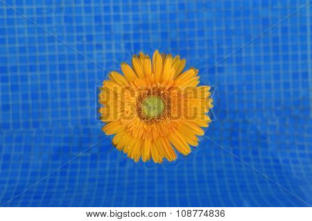 A daisy in a pool