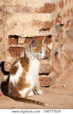 Red and white cat living on the street at Marrakesh, Morocco