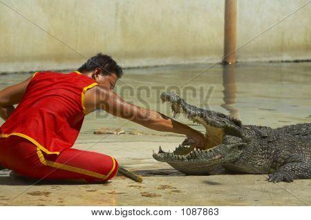 Crocodile-6