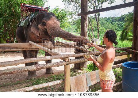 Woman feeding elephant in the jungle, Thailand