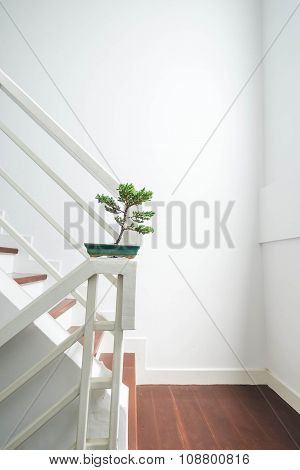Bonsai tree on stairs, interior decoration