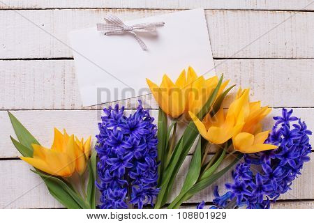 Fresh  Spring Yellow Tulips And Blue Hyacinths  Flowers  And Empty Tag