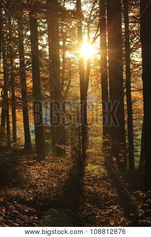 Beautiful Golden Sun In The Forest At Sundown