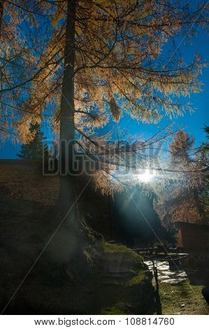 Coloreded Autumn Landscape With Trees And Last Sun