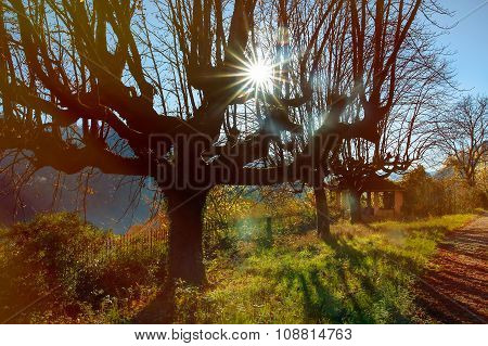 Colored Landscape With Tree And Sun