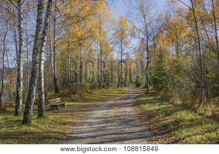 Walkway Through Autumnal Forest