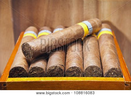 The Cuban cigars hand made. close up in a sunny day