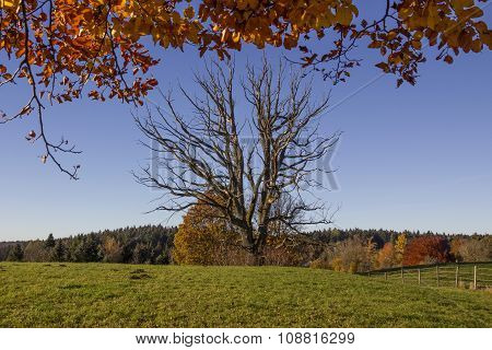 Bare Faced Tree In Autumnal Landscape