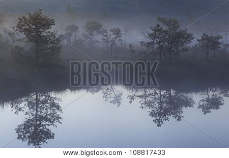 Morning with fog in the bog