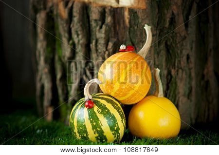 Small Decorative Striped Pumpkins On Green Grass
