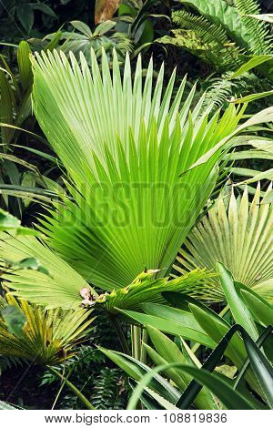 Green Tropical Palm Leaves, Botanical Theme