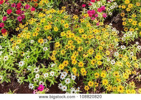 Flowers Blooming Closeup