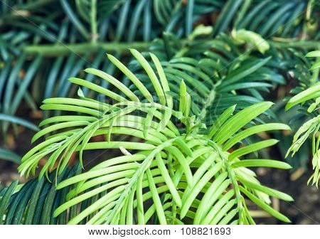 Detailed Photo Of Green Plant, Natural Scene