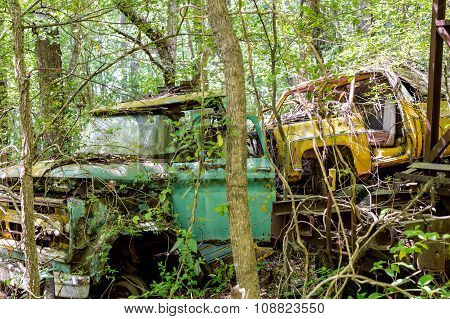 Green And Yellow Trucks In Trees