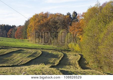 Meadow With Mowed Hay, Colorful Edge Of The Wood