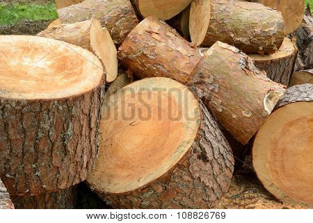 Sawn Pine Logs Heap