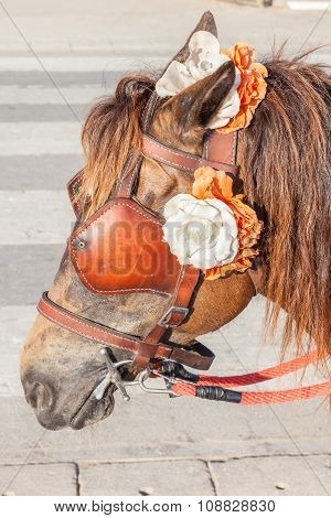 Closeup The Brown Harness With Flower Decoration On Pony For Tourism Sightseeing.