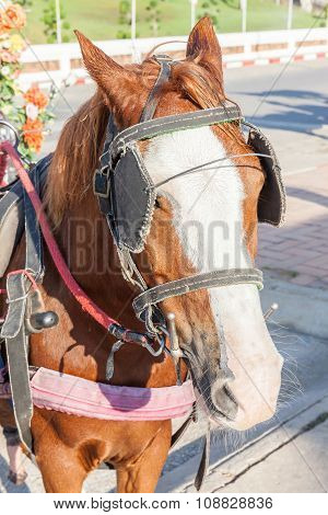 The Harness Pony Portrait With Clipping Path For Carriage.