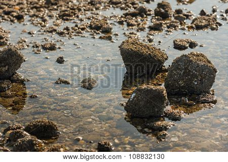 Stones With Acorn Barnacles In Low Sunlight