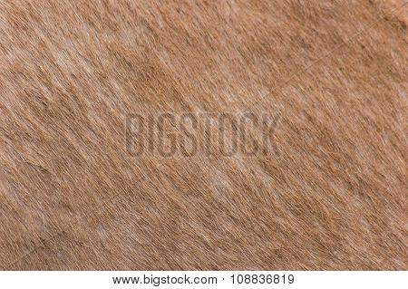 donkey skin texture