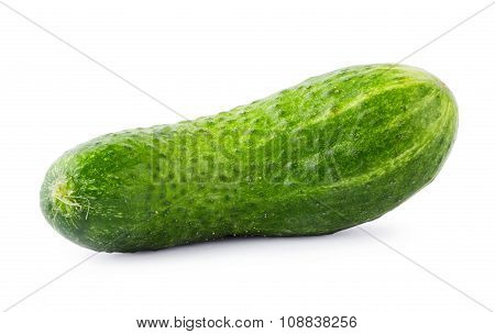 Green juicy cucumber