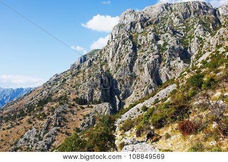View Lovchen mountain with cows. Montenegro.