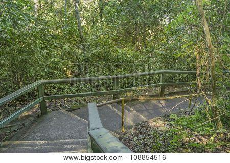 Bridge At Iguazu Park Brazilian Border