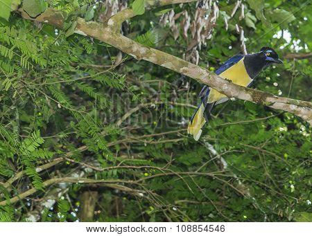 Bird In A Tree At Iguazu Park