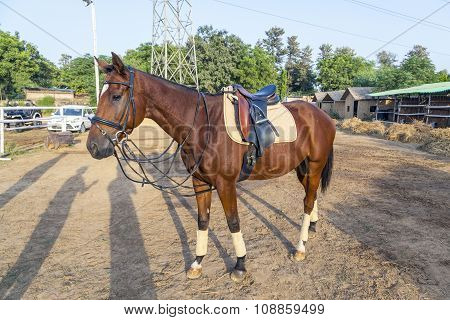 Horse Ready For A Ride