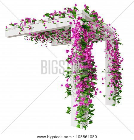 Bougainvillea flowers on pergola