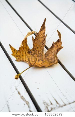 Fallen Autumn Leaf On White Wooden Table