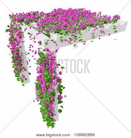 Ivy with pink flowers, top view