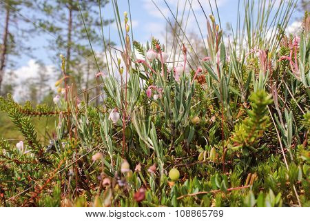 Flowers Marsh