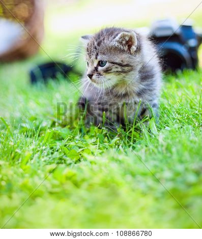little kitten, outdoor