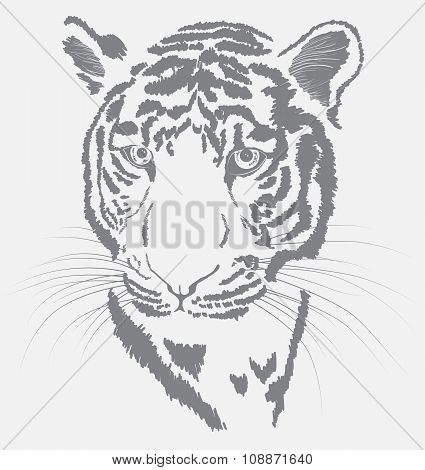 Sketch Of A Tiger's Face