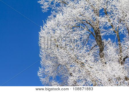 White Winter Wonderland With Blue Sky And Icy Wooden Tree