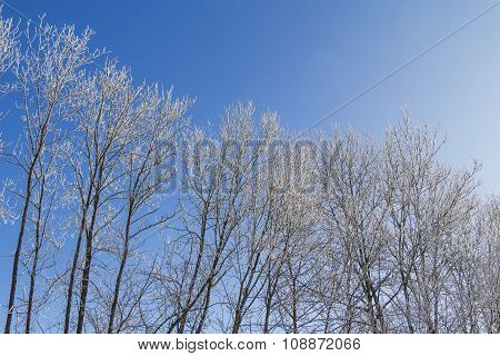 White Winter Wonderland With Blue Sky And Row Of Trees